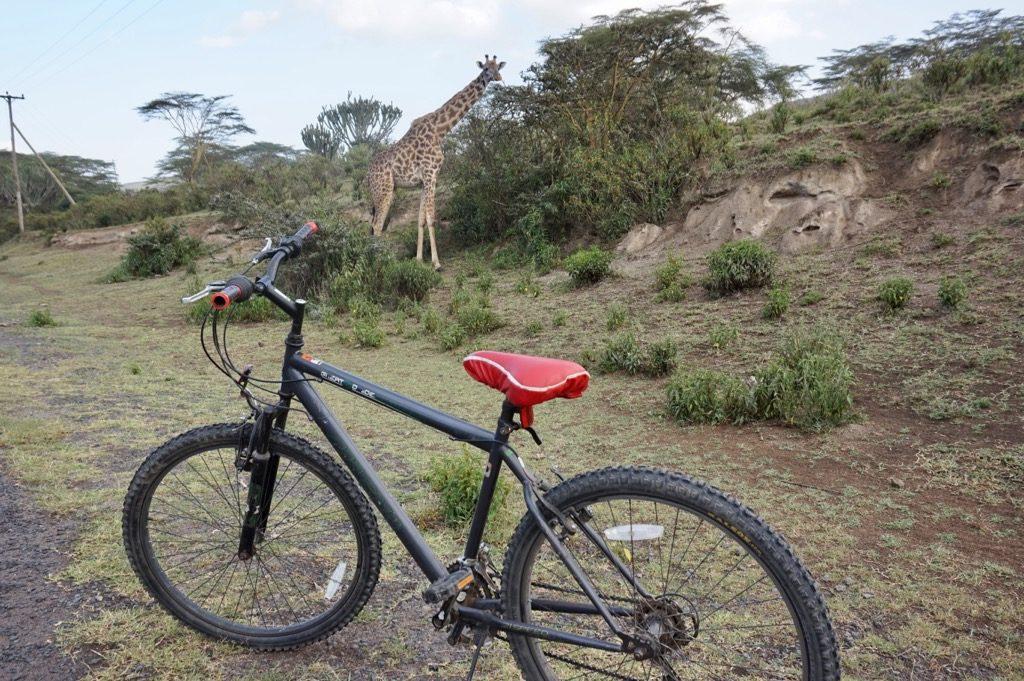 自転車とキリン