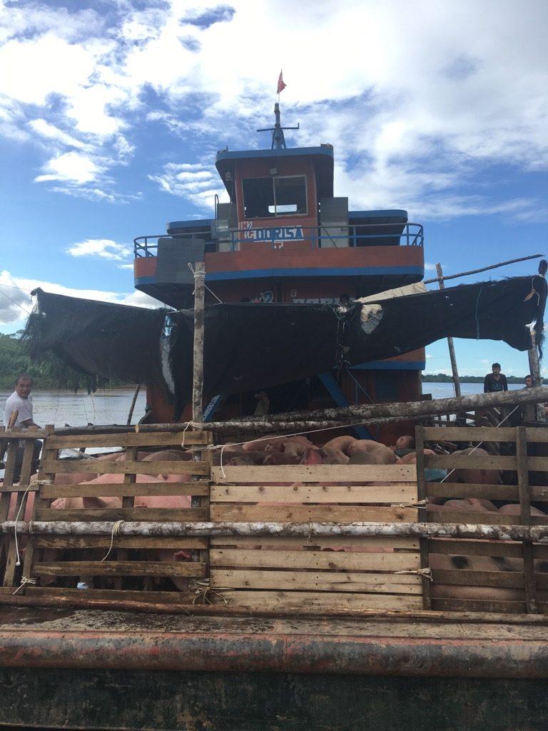 豚を運ぶ貨物船、いっそのことこの船でもいいが、断られた。