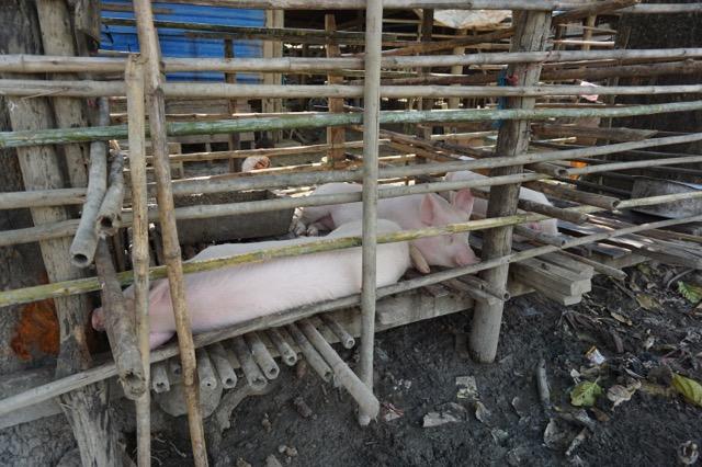 ミャンマーでは豚をよく食べる