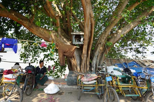 エーヤワディー川沿いの木