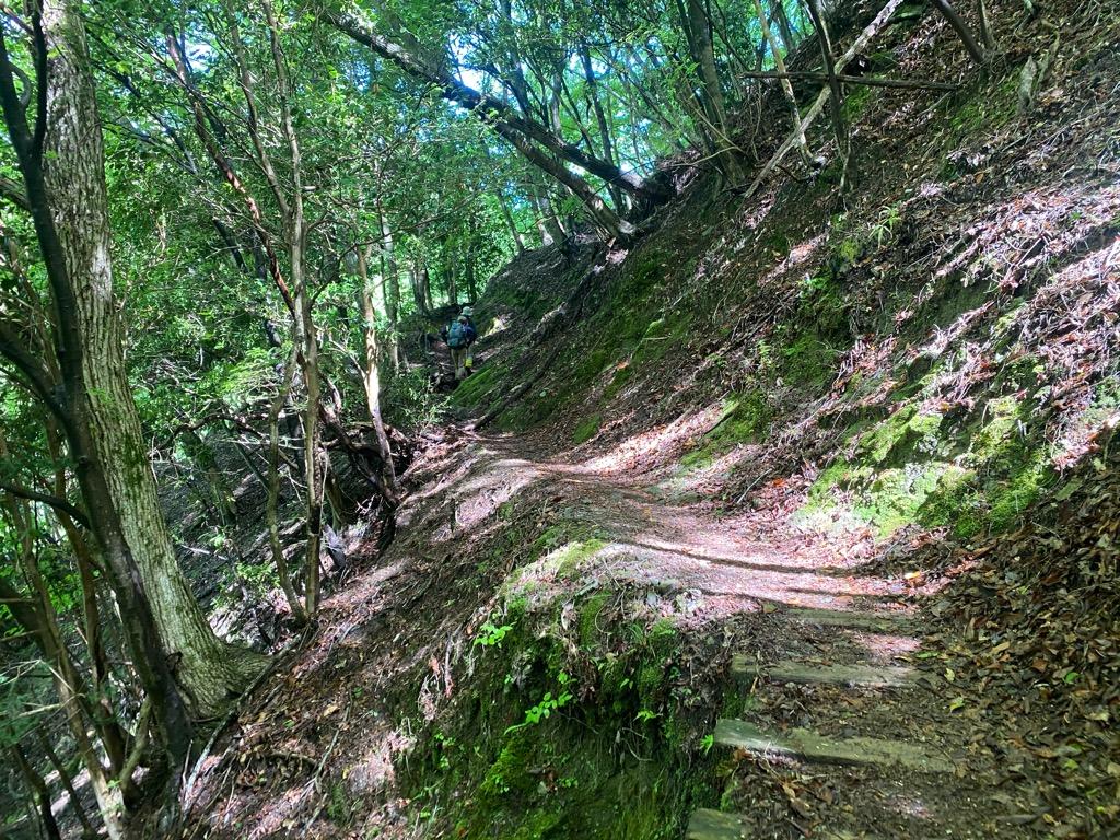つつじ新道登山口~檜洞丸の道中